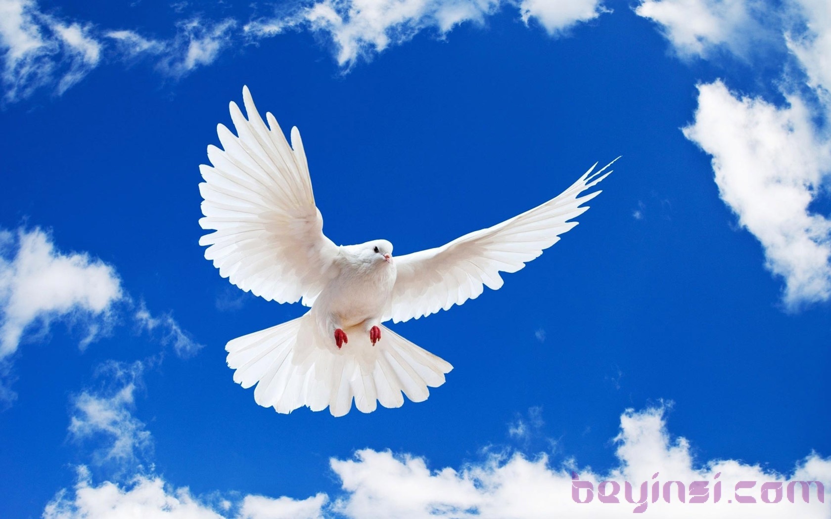 Brautiful-Flying-Pigeon-International-Day-Of-Peace-2015